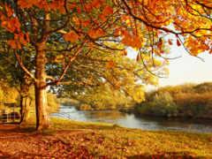 каштан осень река