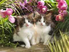 zhivotnye, кошки, котята