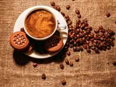 coffee, cup, seed