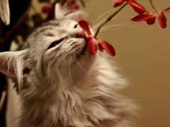 кошки, cats, цветы