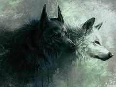волк, white, black