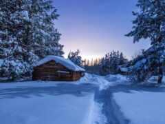 winter, лес, снег