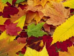 осень, золотая