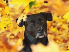 прикольные, смешные, осень, собака