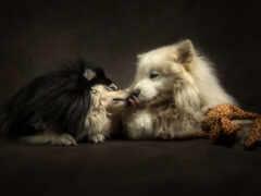 собака, поцелуй, двух