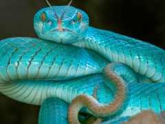 snake, змеи, язык