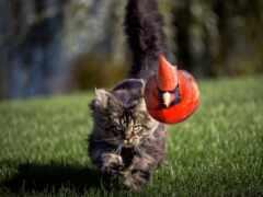 кот, уровень, птица