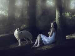 лес, волк, stoloboi