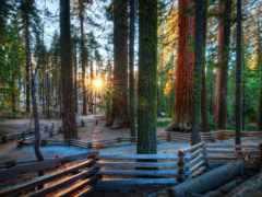 деревьев, стволы