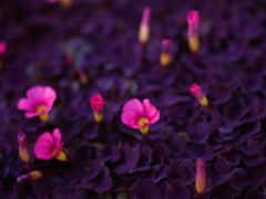 cvety, качественные, заставки