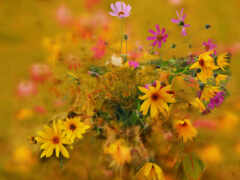 цветы, осень, лепесток