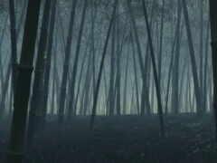 бамбук, black, ложбинка