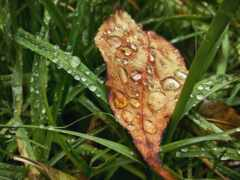 осень, коллекция, листьев