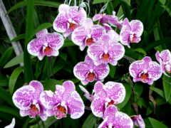 цветы, funart, орхидея