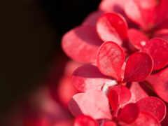 красивые, cvety, хорошем
