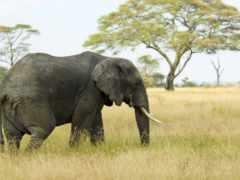 слон, африка, слоны