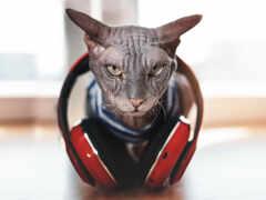 кот, сфинкс, наушник
