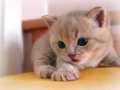 котенок, котята