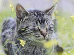 кот, серый, трава