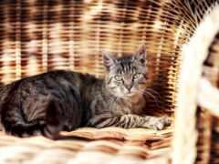 кот, кресло, garden