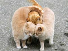 обнимашки, кошки, коты