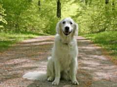 собака, dogs, pinterest