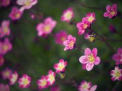 маленькие, cvety, размытом