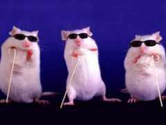 mice, жалюзи, три