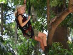 climb, дерево, женщина
