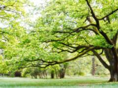 Дерево, лето