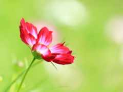 hành, hoa, nın