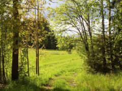 лес, природа, поляна