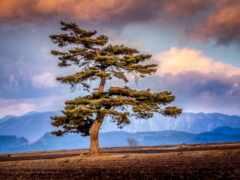 горы, дерево, свет