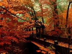 осень, пасть, мост