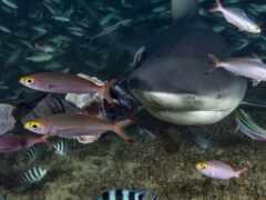 риф, coral, fish