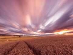 закат, поле, пшеница