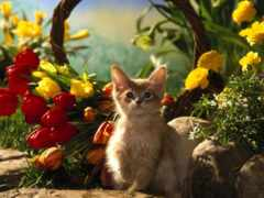 кот, тюльпан, котенок
