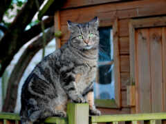 забор, кот, серый