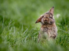 кролик, газон, дерево