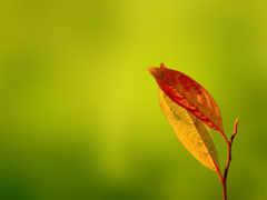 осень, arka, plan