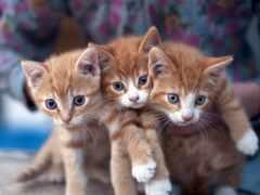 club, пермь, котенок