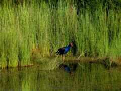 птица, трава, new