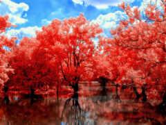 red, природа, осень