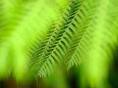 heart, greenery, hojas