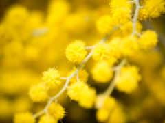flowers, desktop, photography