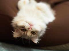 кот, отдых, котенок
