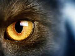 глаз, glaza