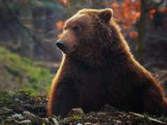 медведь, desktop, мишка