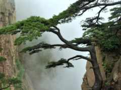 asian, landscape, азия