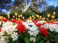 çiçekler, музыка, renkli